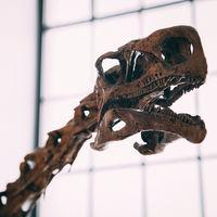 Una encuesta saca a la luz el problema de acoso de las arqueólogas: una de cada dos lo sufren