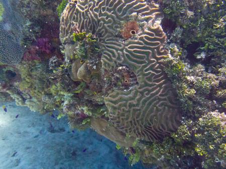Los corales colombianos podrían ayudar a combatir el VIH, según investigadores de la Universidad Nacional