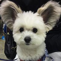 La última estrella de Instagram es este perro que ha enamorado a medio mundo... ¡por sus orejas!