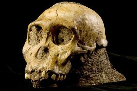 Hallado un eslabón más en la evolución humana