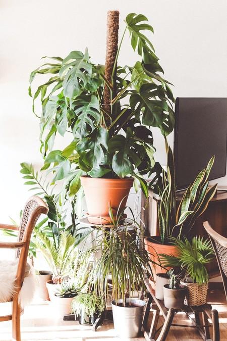Sistemas de riego para plantas