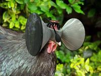 Casco de realidad virtual próximamente en un gallinero cerca de ti