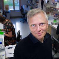 Se identifica un nuevo órgano sensorial en nuestra piel que nos informa del dolor de pinchazos