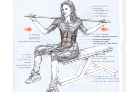rotacion-tronco