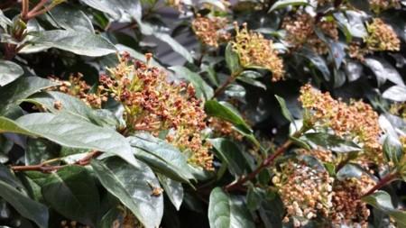 Flores en foto diurna s4