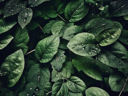 Nueve formas para usar bicarbonato de sodio en tu huerto en casa y obtener plantas más grandes y saludables