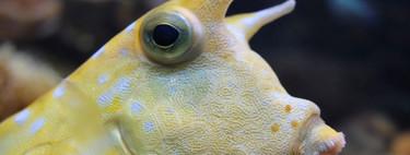 """Los """"trucos"""" de los peces y otros animales marinos para hidratarse con agua de mar"""