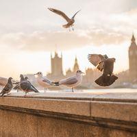 Si las palomas son tan buenas como los humanos diagnosticando cáncer, necesitamos algoritmos