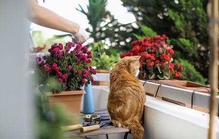 Cómo convertir el balcón en un vergel