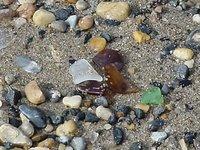 Piedras preciosas que podemos encontrar en la playa
