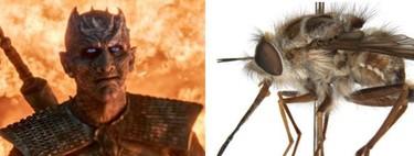 Una nueva especie de mosca ha sido bautizada en honor a 'Juego de Tronos'