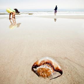 Picaduras de medusas en niños: cómo prevenirlas, qué hacer y qué no hacer si les pican