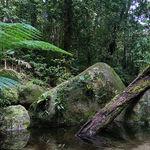 Esta es la selva tropical más antigua, inspiró la película 'Avatar' y se encuentra en Australia