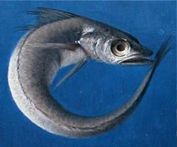 Teoría de la evolución: ¿la pescadilla que se muerde la cola?