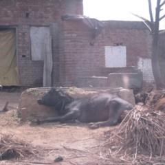 caminos-de-la-india-mathura