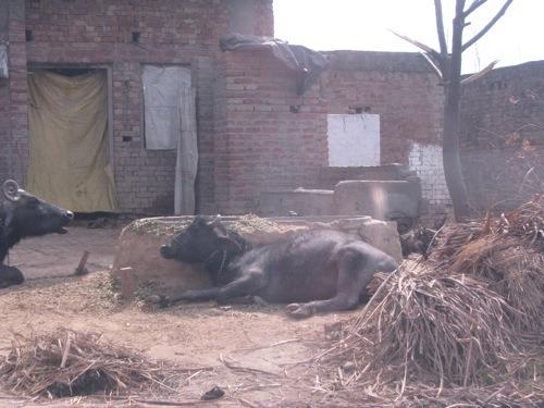 Foto de Caminos de la India: Mathura (1/14)