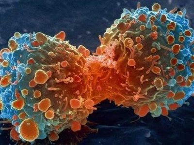 Por azar se descubre una proteína que podría combatir todos los cánceres