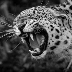 Foto 3 de 12 de la galería la-belleza-animal-en-blanco-y-negro en Xataka Foto