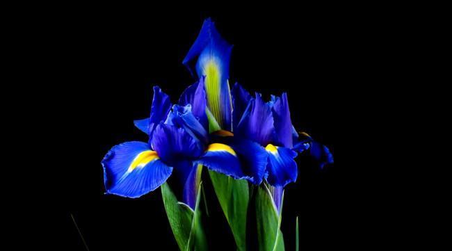 Un precioso timelapse sobre el despertar de las flores