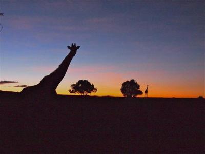 Kenia: información práctica para organizar tu viaje
