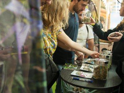 Las 'startups' del cannabis buscan su oportunidad en España