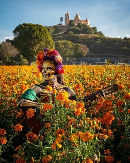 Que Significa La Flor De Cempasuchil En La Ofrenda