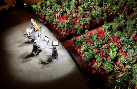 Conciertos por y para plantas: la larga y fascinante relación entre la música y la botánica