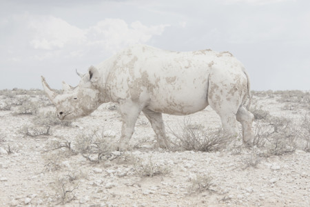 Rhinomaroesjka Lavignesony World Photography Awards 2016