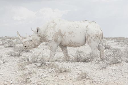 Rhinomaroesjka Lavignesony World Photography Awards 2016