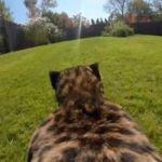 Un guepardo en visión subjetiva