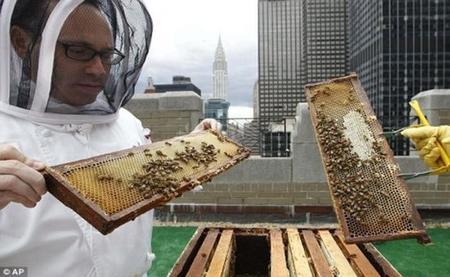 Waldorf-Astoria-Beekeeping
