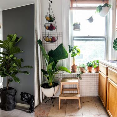 17 ideas prácticas para decorar la cocina con plantas y darle un estilo único