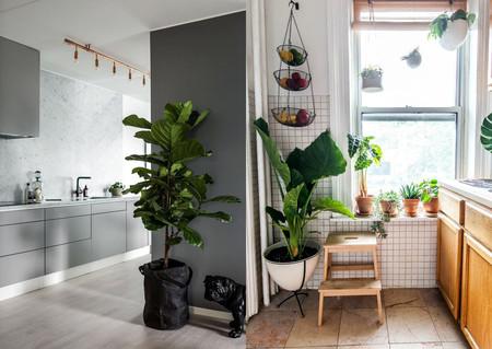 17 ideas prácticas para decorar la cocina con plantas y darle un ...