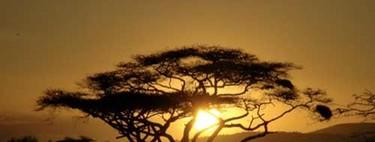La llamada de África: el rugir de la sabana tanzana