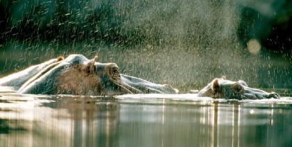 Los 10 mejores destinos para ver vida salvaje en Africa (VIII)