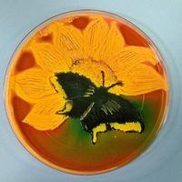 Cuando las bacterias crean obras de arte: 13 placas de Petri que quedarían estupendas colgadas en tu salón