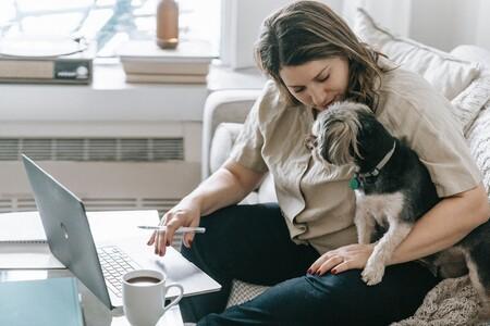 ventajas de los perros en la oficina