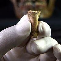Se encuentra el que probablemente sea uno de los últimos collares elaborados por los neandertales