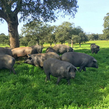 Guía práctica: despiece de los cortes del cerdo ibérico más sabrosos (y en qué recetas puedes utilizarlos)
