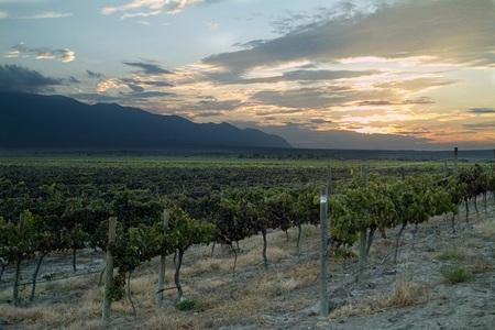 Enoturismo en Latinoamérica: vinos de Bolivia