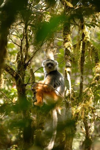 Foto de Madagascar (2/5)