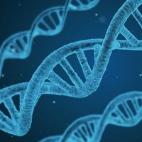 Los genes podrían ser más importantes para tu salud que tu estilo de vida, según nuevo estudio
