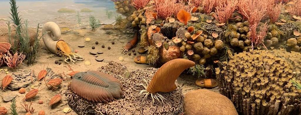 Los trilobites respiraban por las patas, con estructuras como branquias colgando de sus muslos