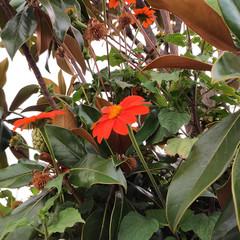 Foto 12 de 29 de la galería blackberry-key2-fotografias en Xataka