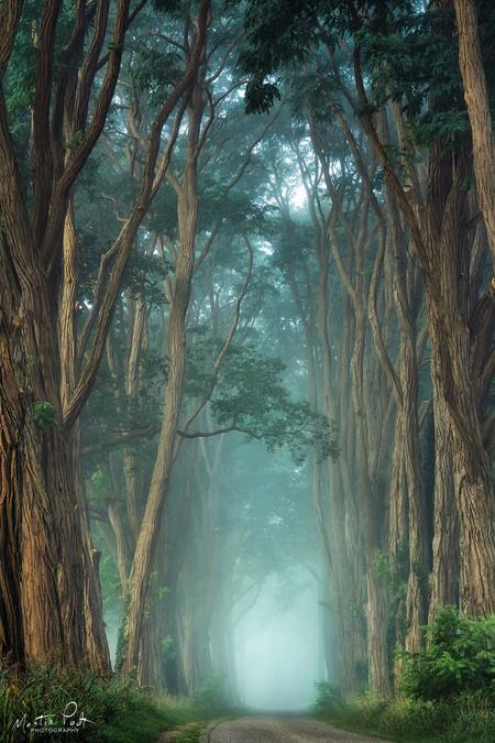 Martin Podt Forest 4