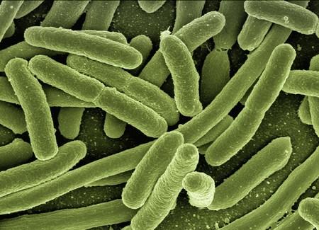 Koli Bacteria 123081 1920