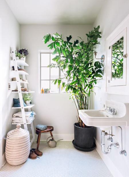 Minimal Plantas 5