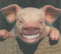 Singularidades extraordinarias de animales ordinarios (XI): el cerdo