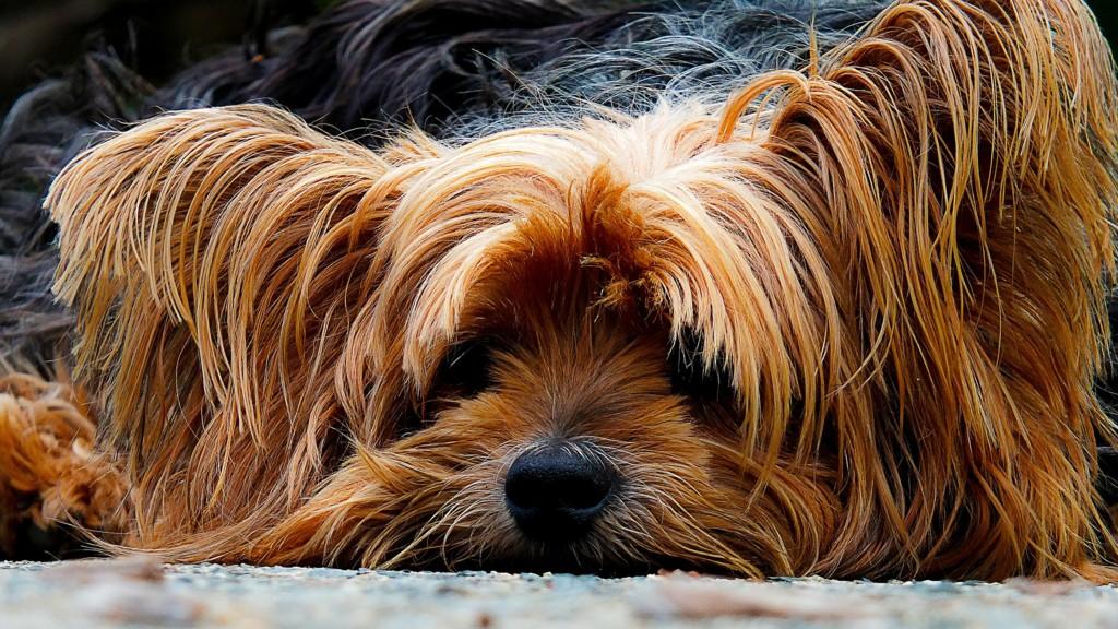200942 1920 Dog