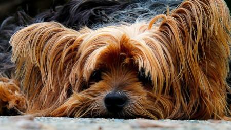 Cuatro prepara 'Amores perros' (y no es un remake de la peli)